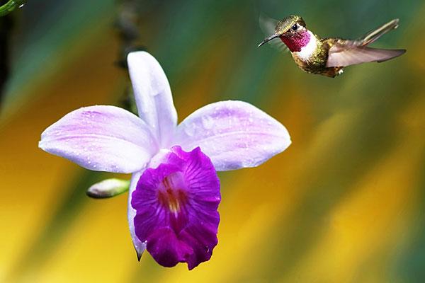 hummingbirds of costa rica.jpg
