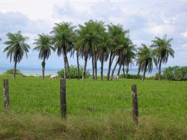 Playa Matapalo.jpg
