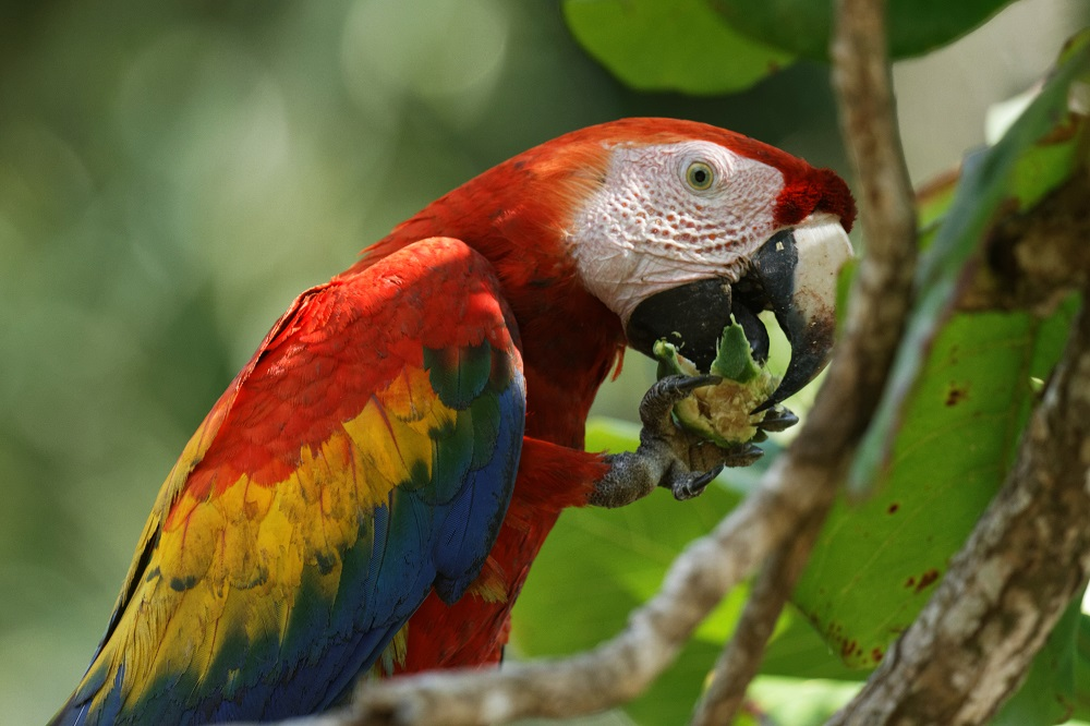 macaw resized.jpg