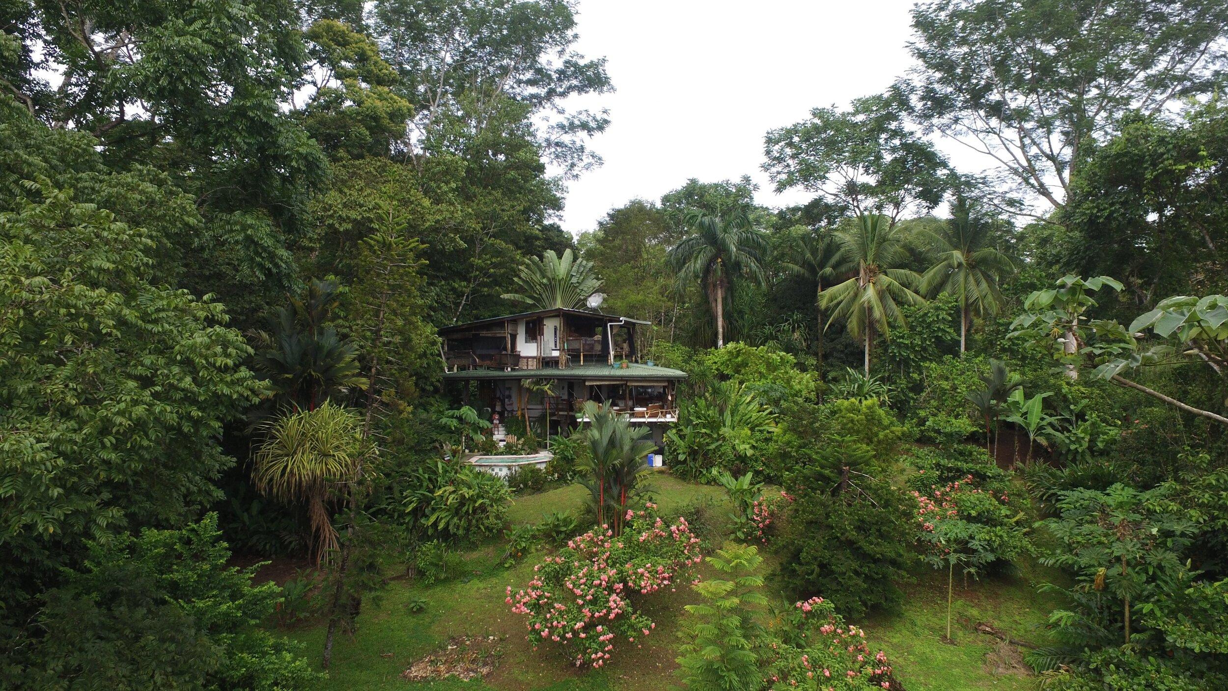 Jungle POOL CASA.jpg