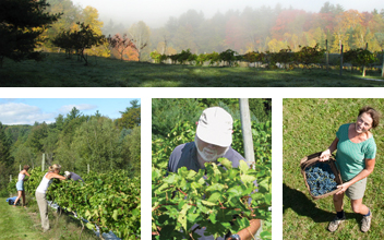 Poocham Hill Vineyard - withvarieties of hybrid wine grapes, four whites and five reds, that grow and mature well in their southwestern New Hampshire location on the hills above the Connecticut River. Yes, it is all about the grapes. ........        http://www.poochamwinery.com/