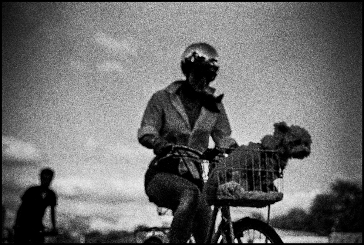 Cyclists & Dog, 2017 - #7