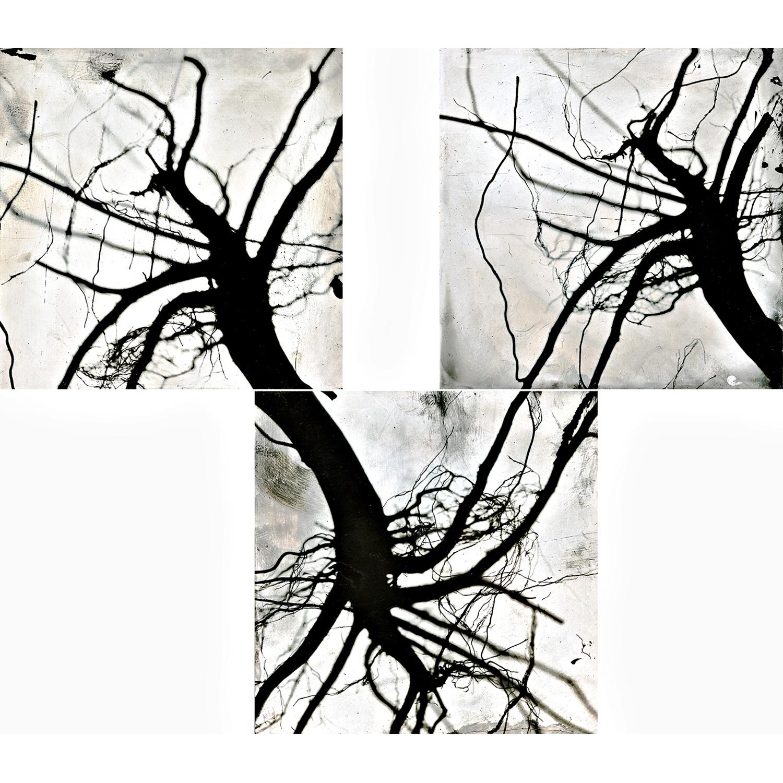 roots #5.jpg