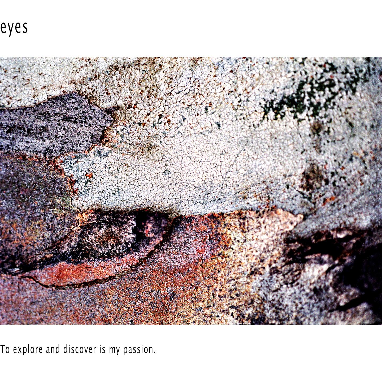 eye - bark #11