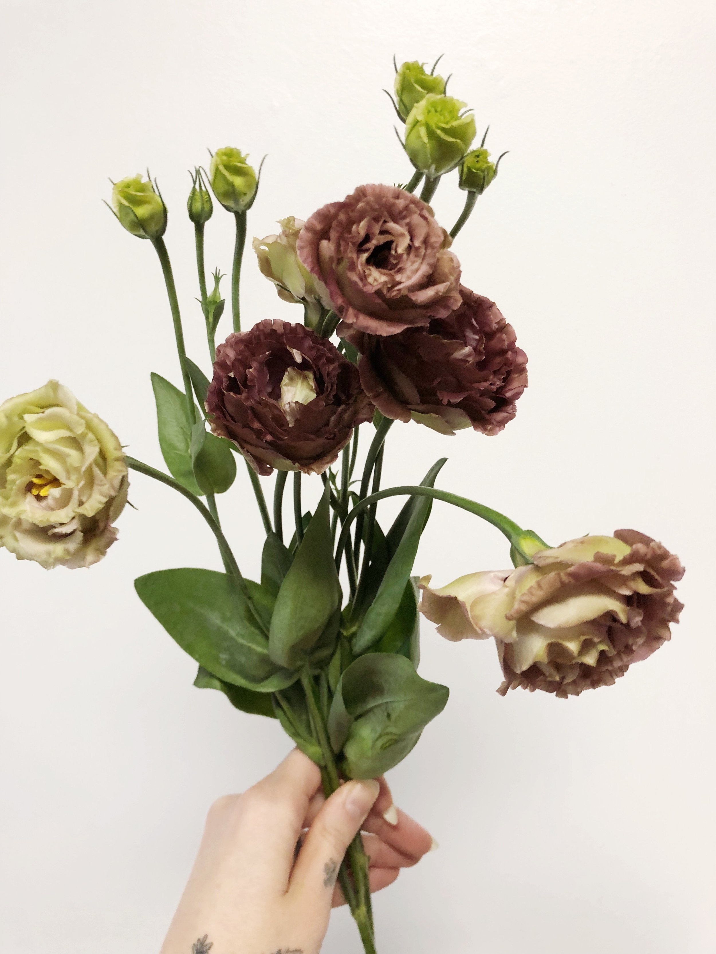 brown lisianthus