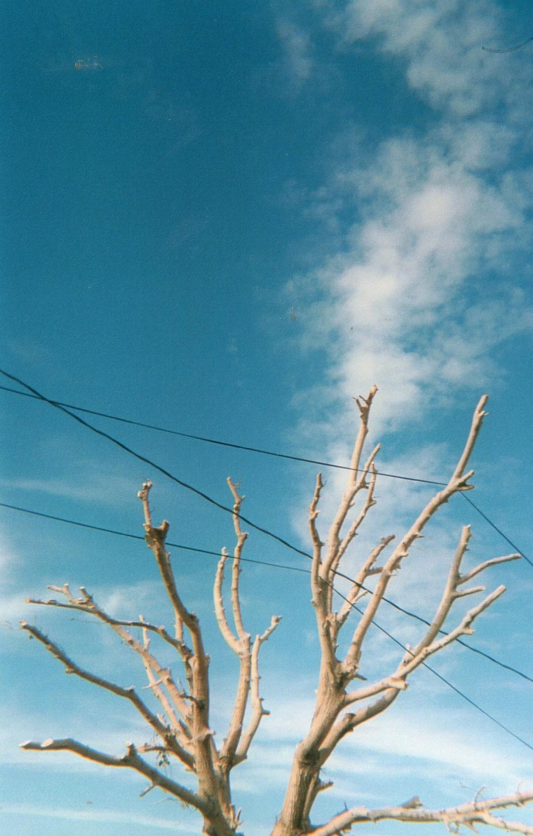 Bakersfield Tangle