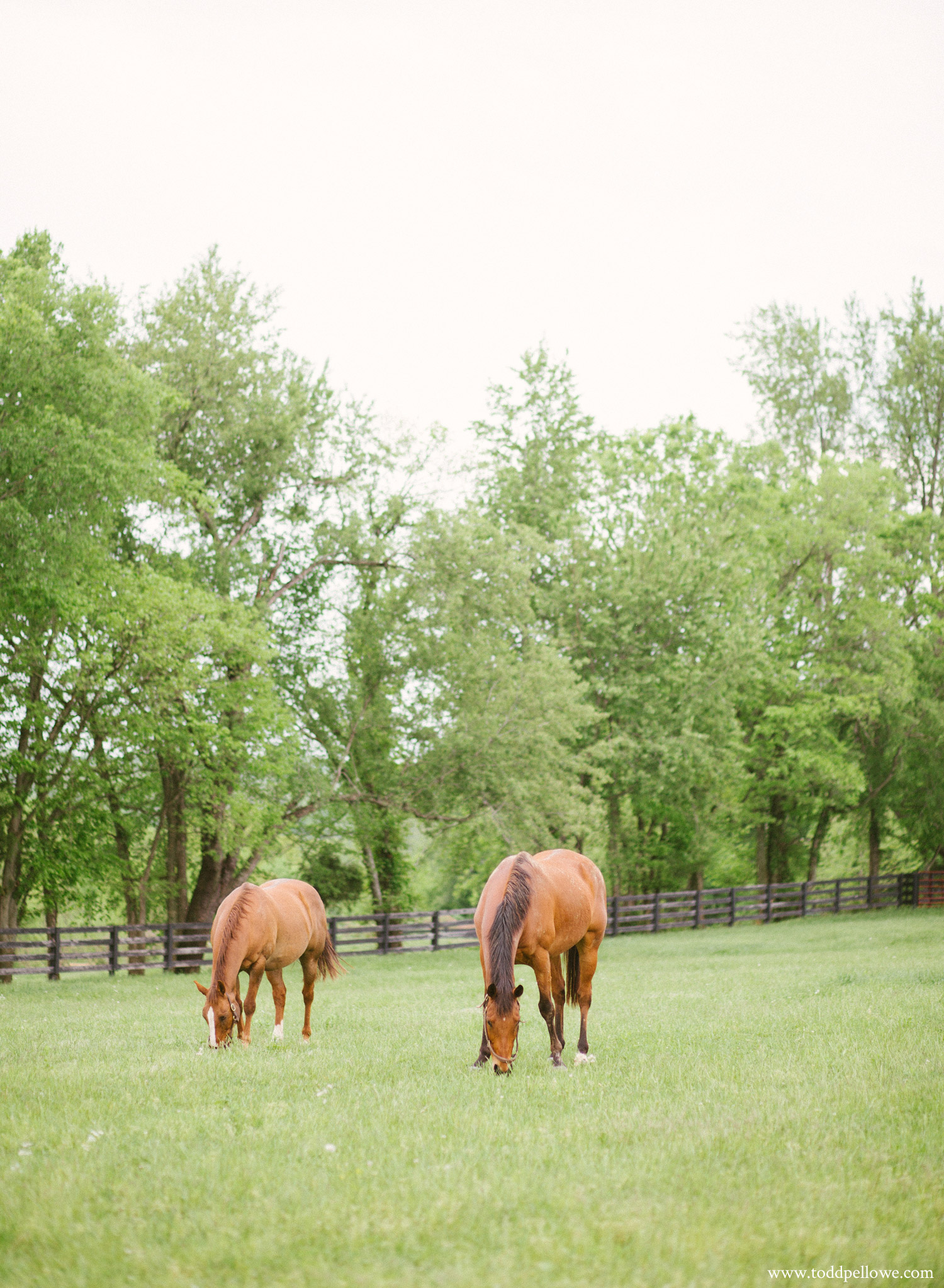 03-long-ridge-farm-wedding-shelbyville-247.jpg