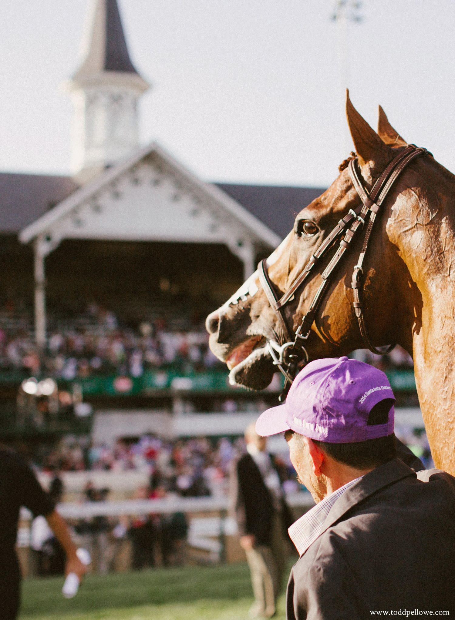 California Chrome at Churchill Downs after winning Kentucky Derby 140