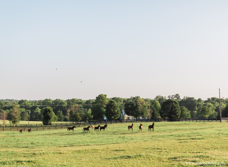 06-horse-farm-engagement-photography-115.jpg