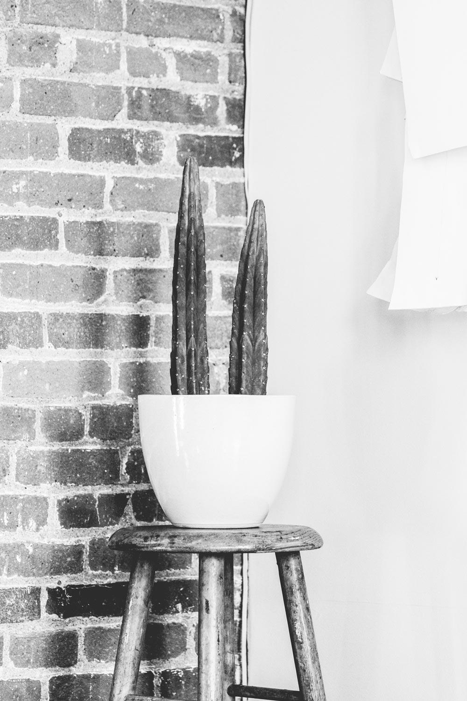 Cactus + Patterns