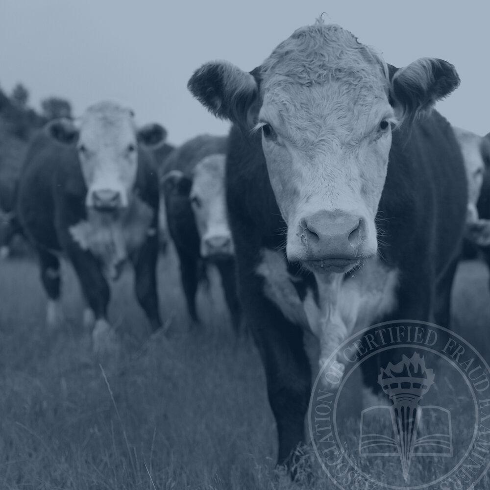 ghost-cattle-fraud-scheme.jpg