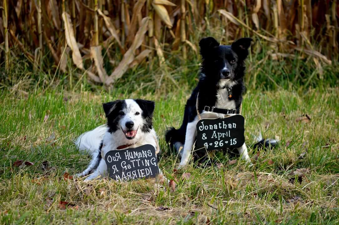 Dogs announcement.jpg