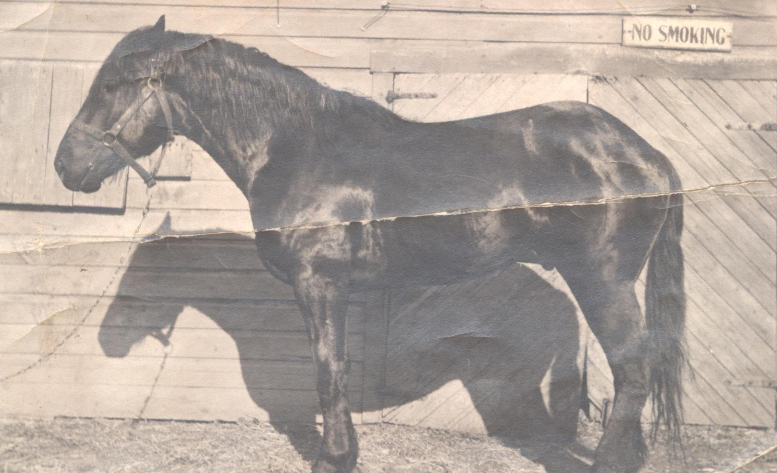 Horse Before.jpg