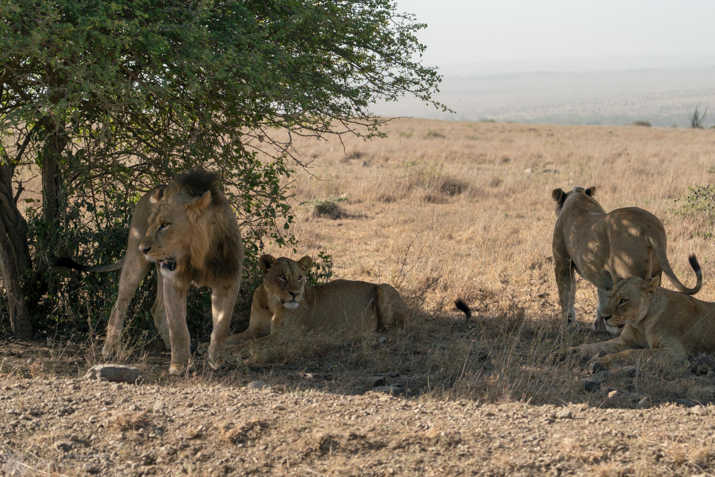 17_mateohinojosa_20170124_Kenya_mfh_DSC02034.jpg