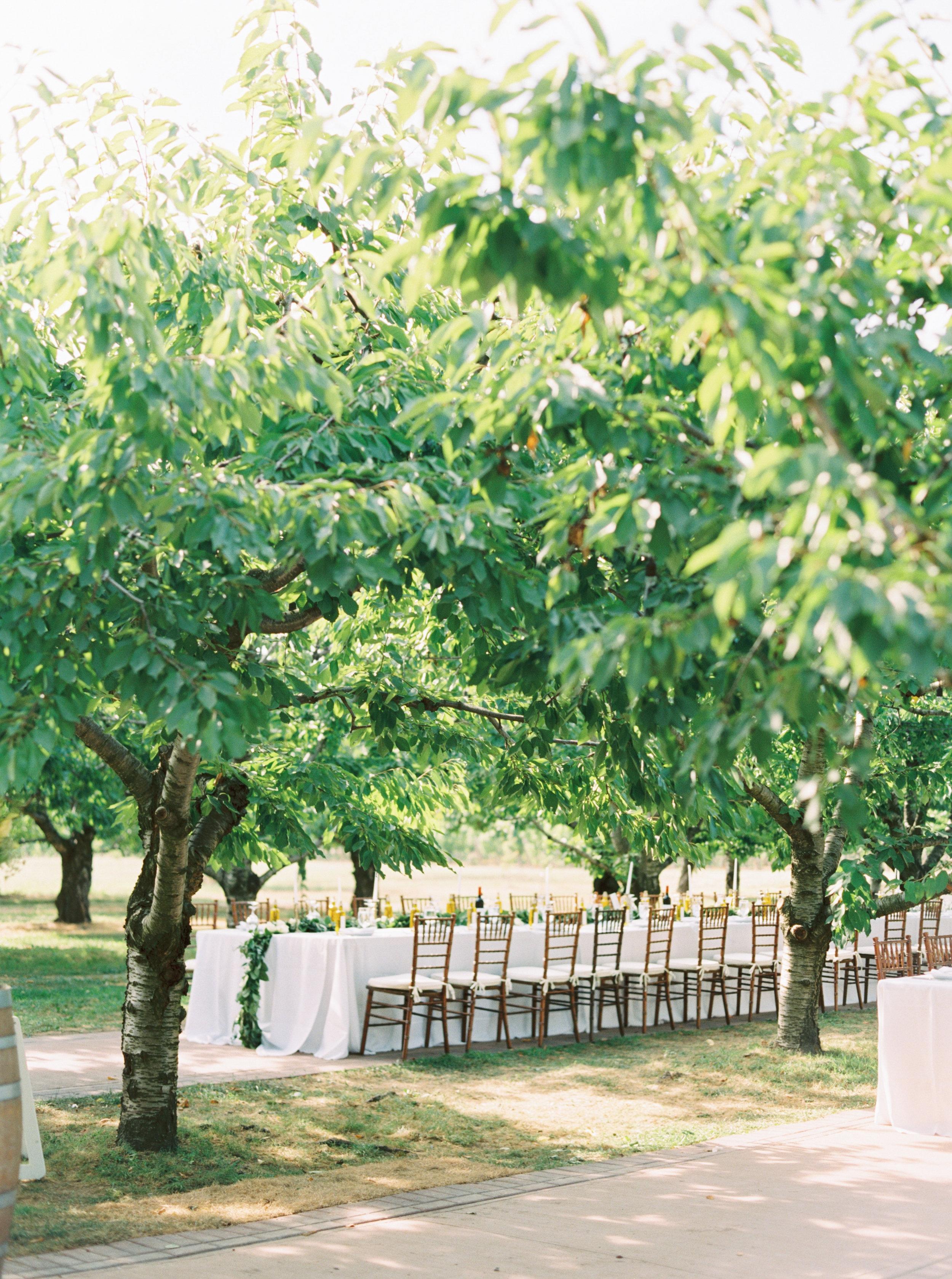gracewood-kurtz-orchards-toronto-wedding-photographer-kurtz-film-richelle-hunter-cassandra-zac-dalpe-previews-30.jpg