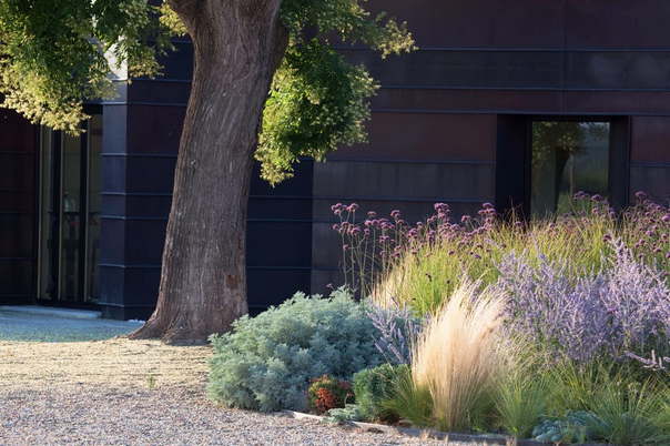 Christina Fluegge via Greige Design . This garden features native grasses and Russian Sage.