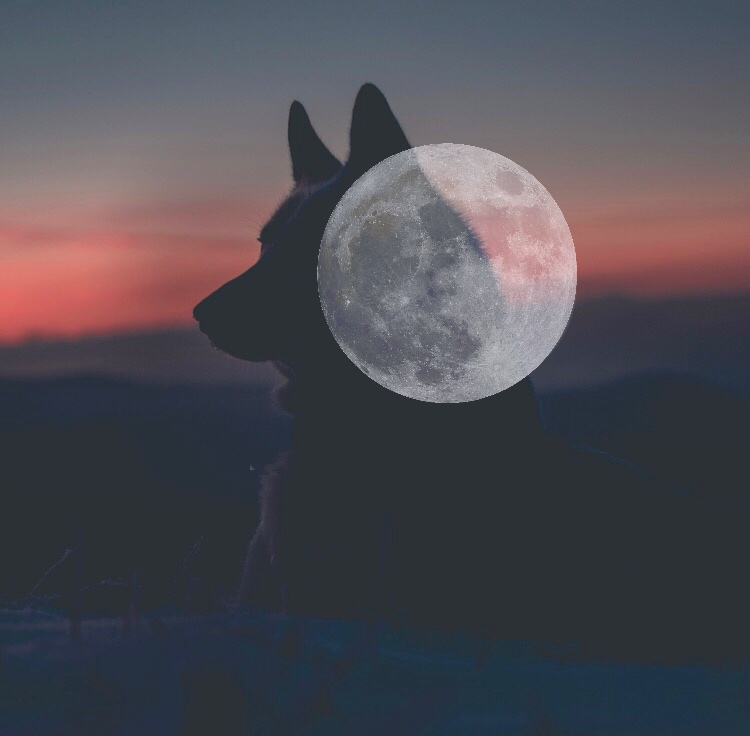Wolf Moon - A lunar forecast for January 16 - February 15, 2018 by Susan Lipshutz featuring tips and practices for working with the energies of the month.
