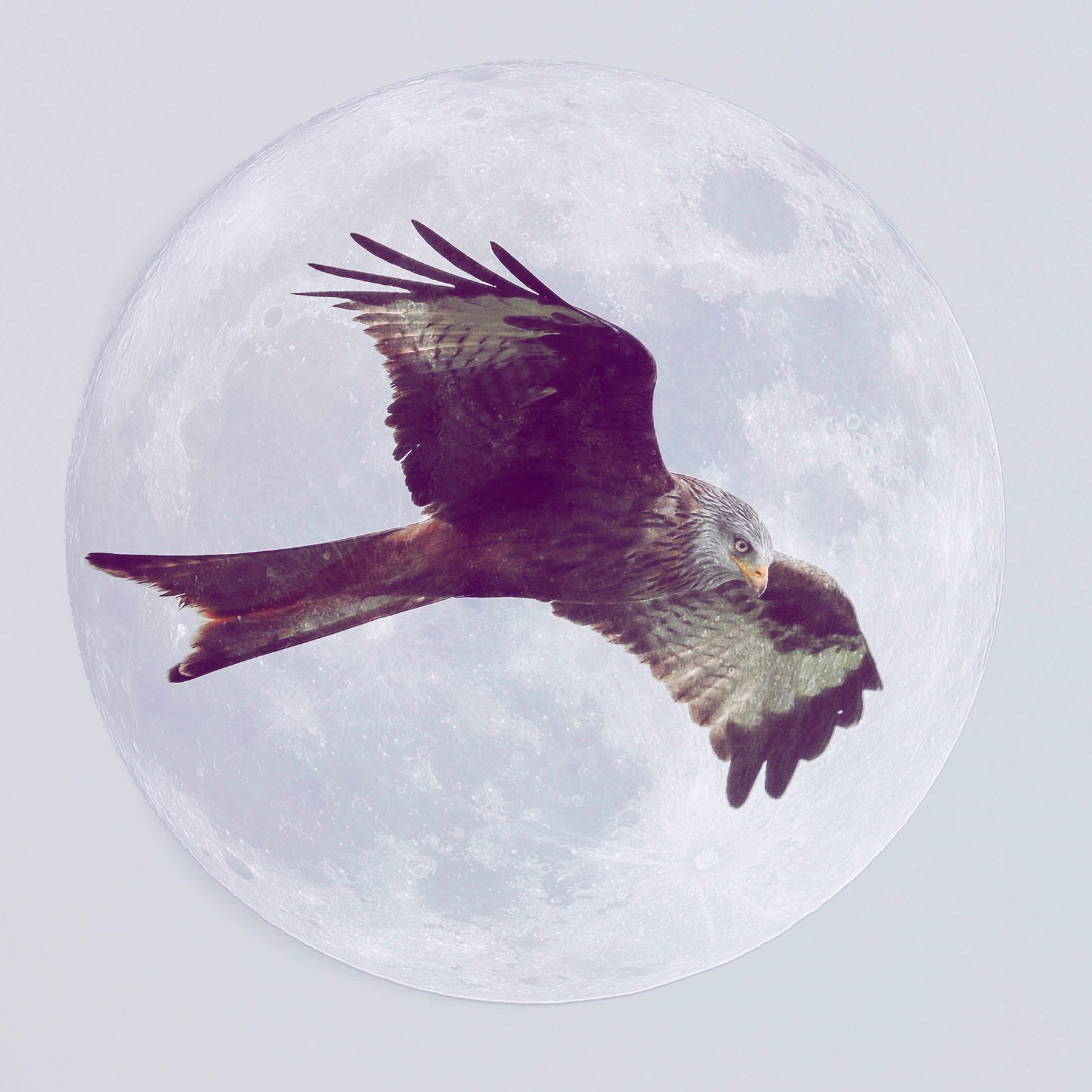 Liberation Moon - A lunar forecast for February 15 - March 17, 2018 by Susan Lipshutz featuring tips and practices for working with the energies of the month.