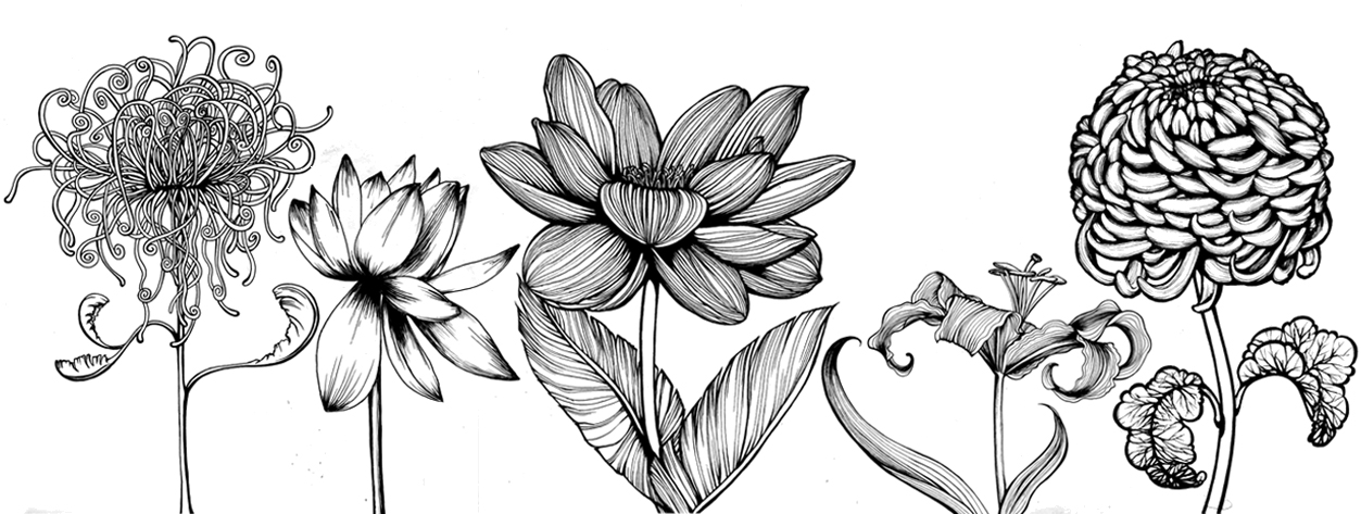 flowerrow.jpg