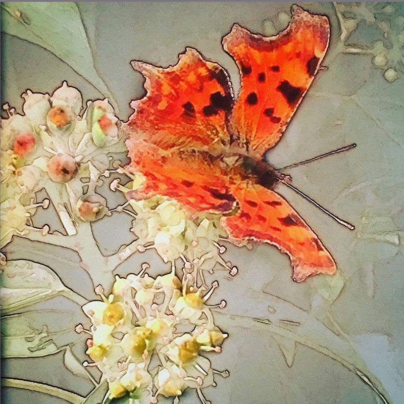Julia_Art_sm_800.jpg