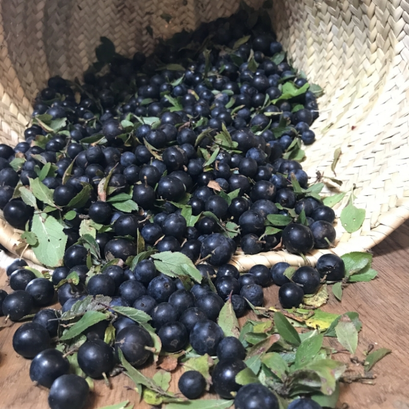 Organic Sloes picked at the farm yesterday - all ready for pre gin preparation