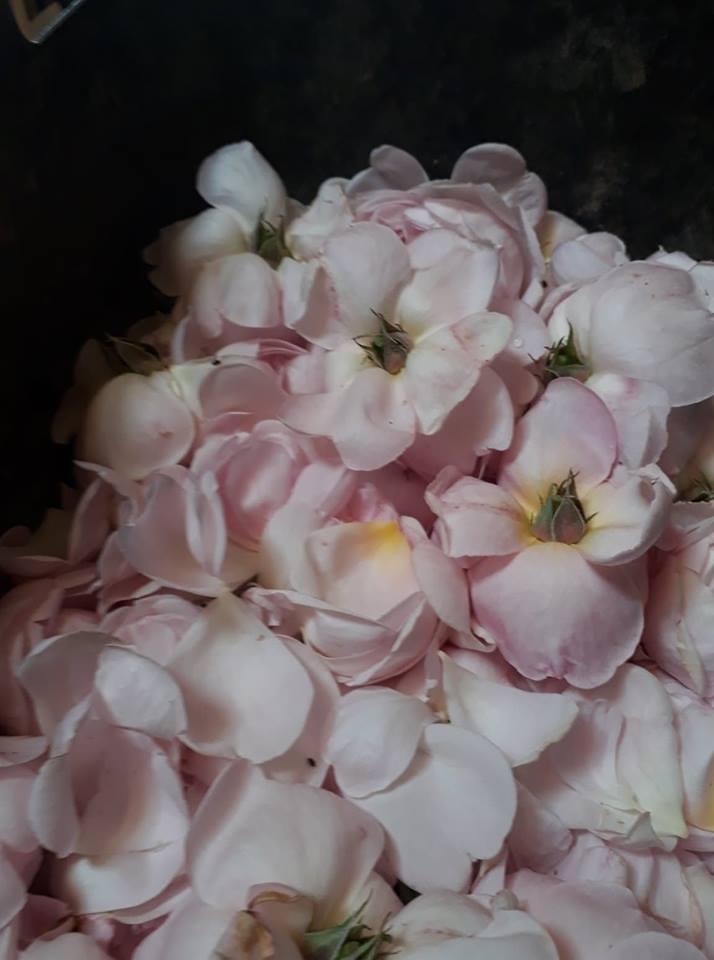 pale roses.jpg