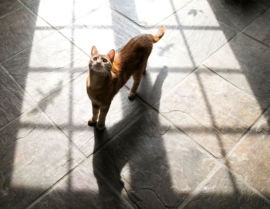 cat bird shadows.jpeg
