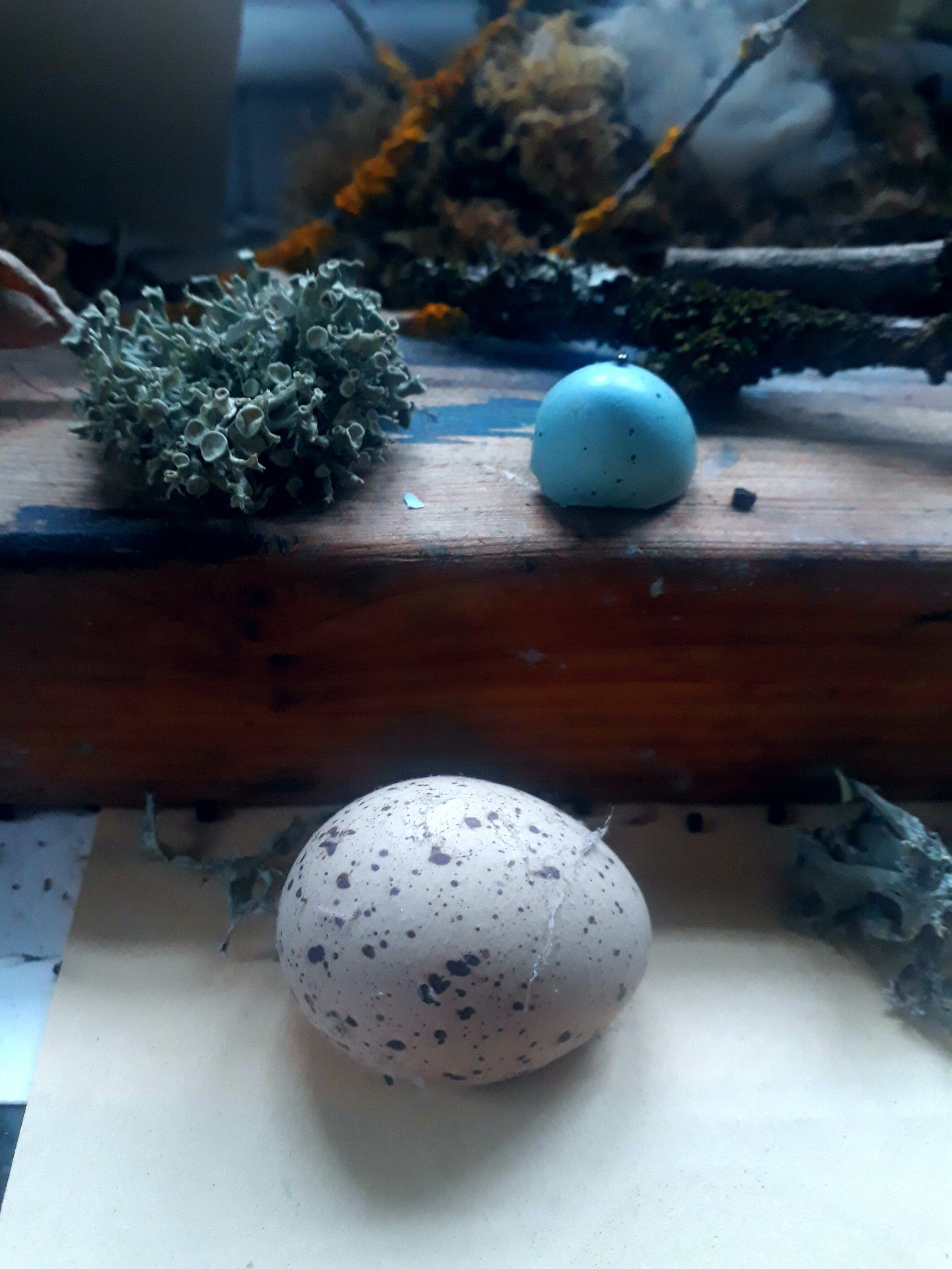 Eggs - Linda Felcey Studio
