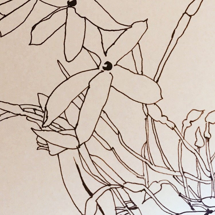 plant drawing 2.jpg