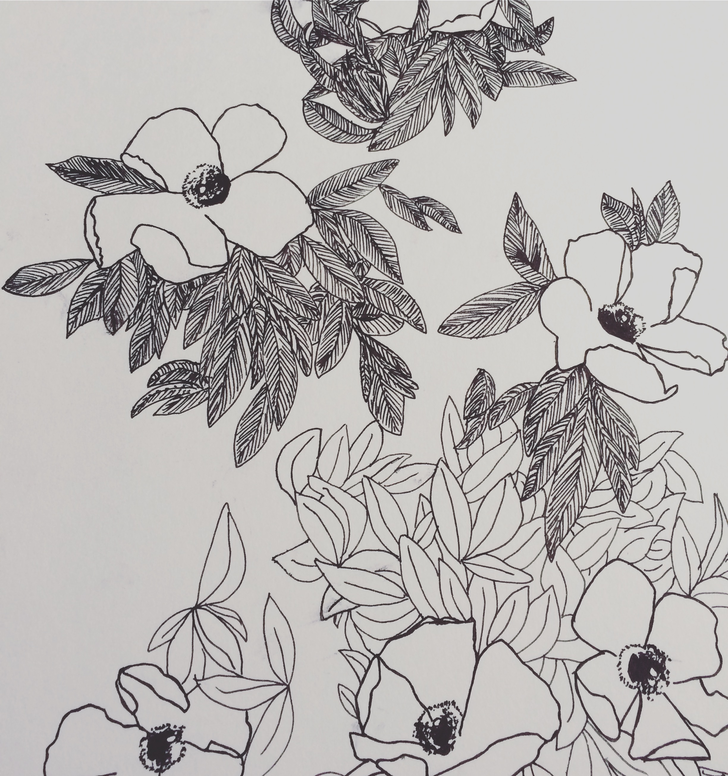 plants drawing.jpg