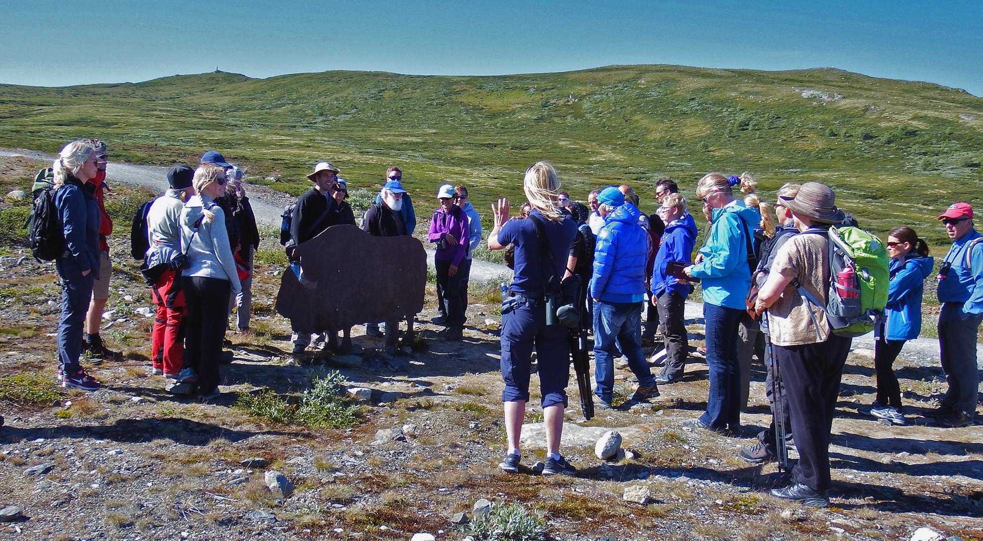 Naturveileder Heidi Ydse ved Norsk Villreinsenter Nord innleder entusiastisk ved starten av den historiske vandreturen opp til viewpoint Snøhetta på Tverrfjellet. Foto: Tor Punsvik