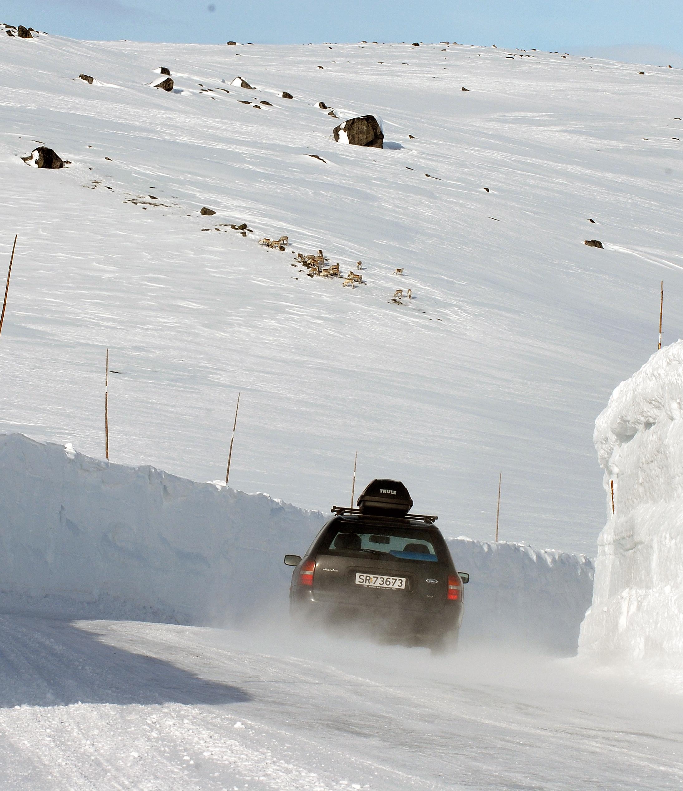 Foto: Olav Strand/Norsk institutt for naturforskning