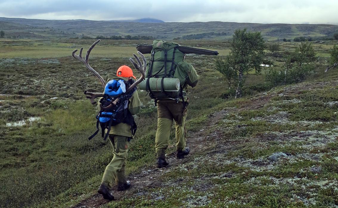 Alle villreinjegere i Nordfjella (kvote på 900 dyr), 100 jegere på Hardangervidda og 100 jegere i Forollhogna (bildet) skal i høst levere hodet av felt dyr. Foto: A. Nyaas