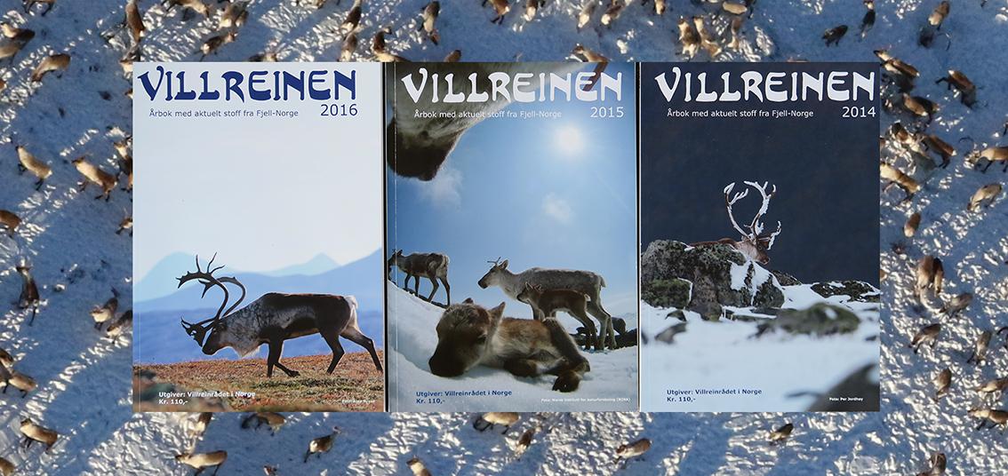 """Stillingen som redaktør for årboka """"Villreinen"""" lyses ut nå, med tiltredelse fra juni 2017. Foto: Arne Nyaas"""