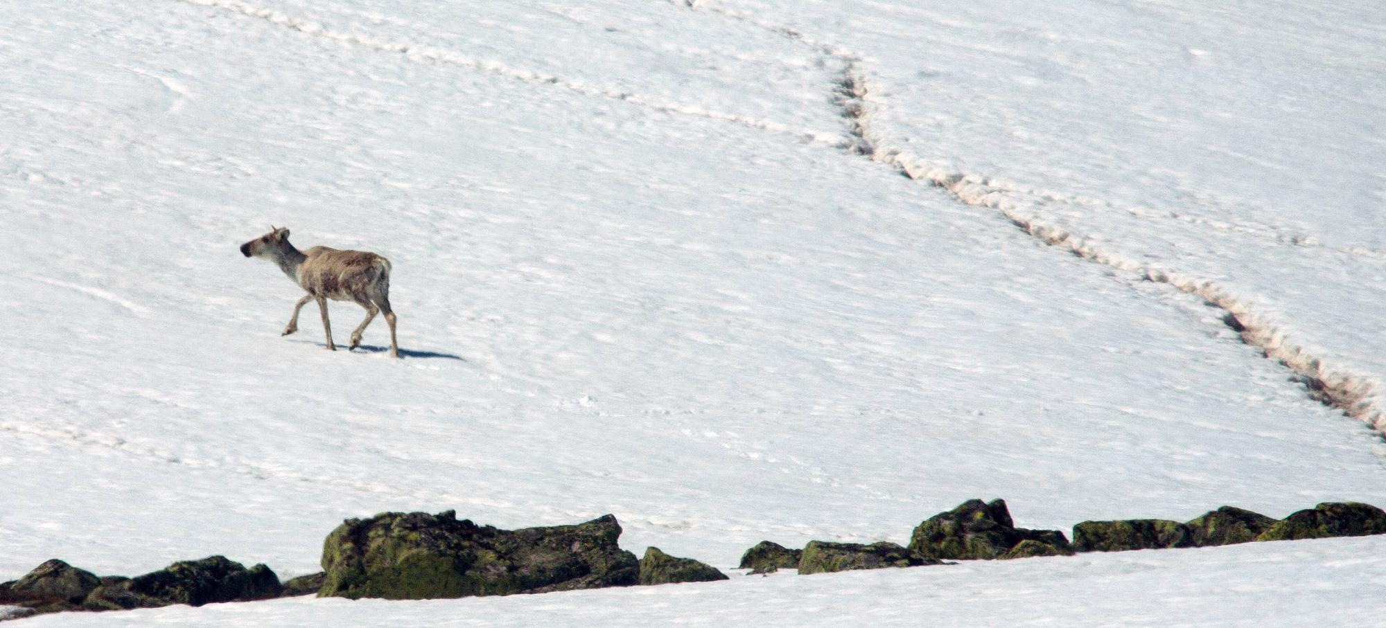 Det arbeides med å få til ein test for å kunne sjekke levende dyr for skrantesjuke. Foto: Kjell Bitustøyl
