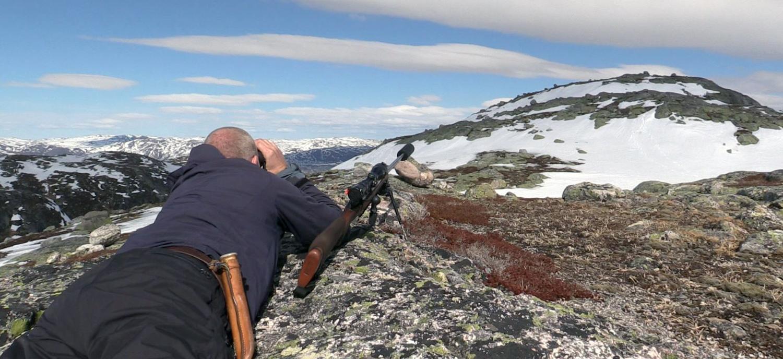 Reinen i Nordfjella skal bort, men sentral og lokal forvaltning er ikkje heilt samde om tidsaspektet. Illustrasjonsfoto: Anders Mossing