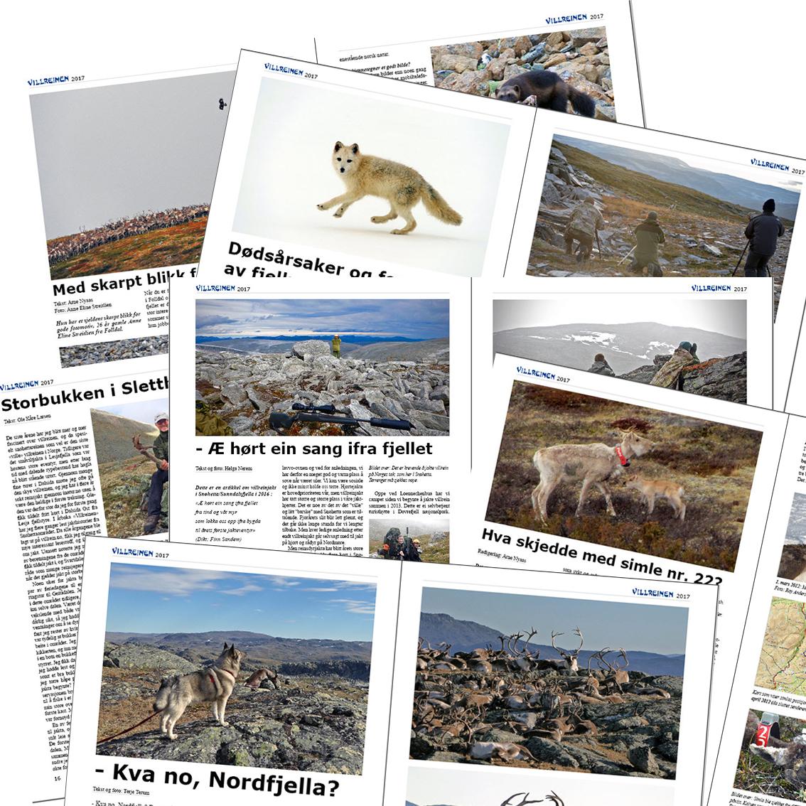 """""""Villreinen 2017"""" er på 108 sider - og kommer fra trykkeriet i slutten av mai. Faste abonnenter er de første som mottar bladet som da er plastpakket. Bildet over viser noe av innholdet i årets utgave. Illustrasjon: Arne Nyaas"""