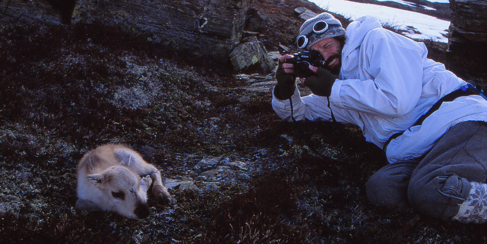 Terje Skogland fotograferer ein reinskalv under feltarbeid. Foto: Johan Brun