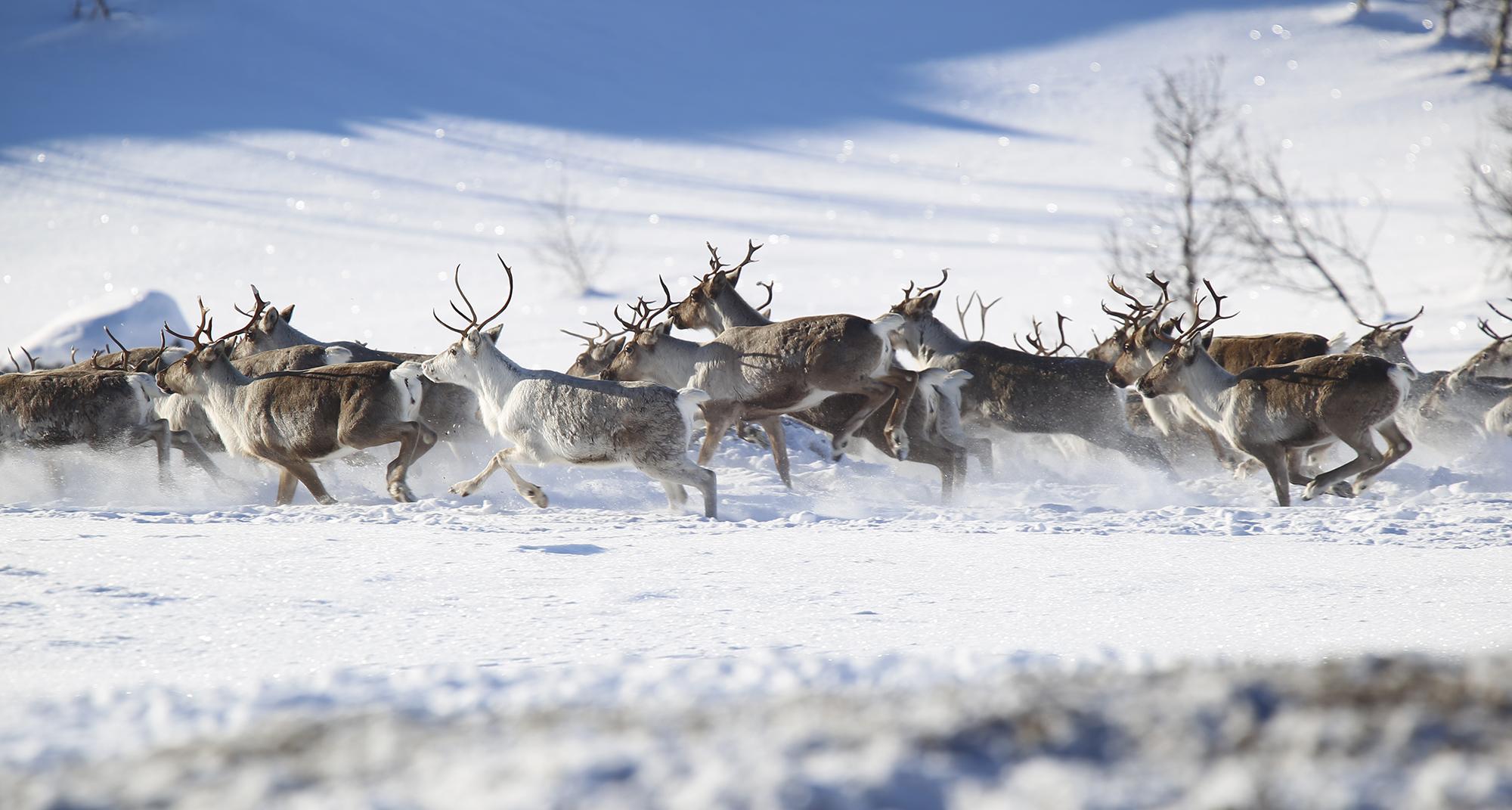 Mange er bekymra for utviklinga i Rondane. Illustrasjonsfoto: Anders Mossing