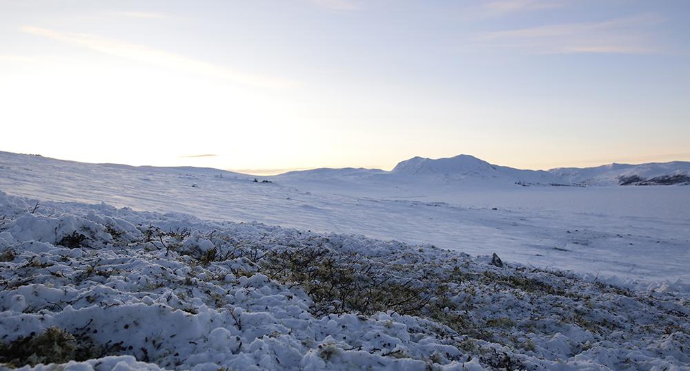 De rike lavbeitene øst for veien har virkelig kommet reinen til gode i vinter. Foto: Anders Mossing