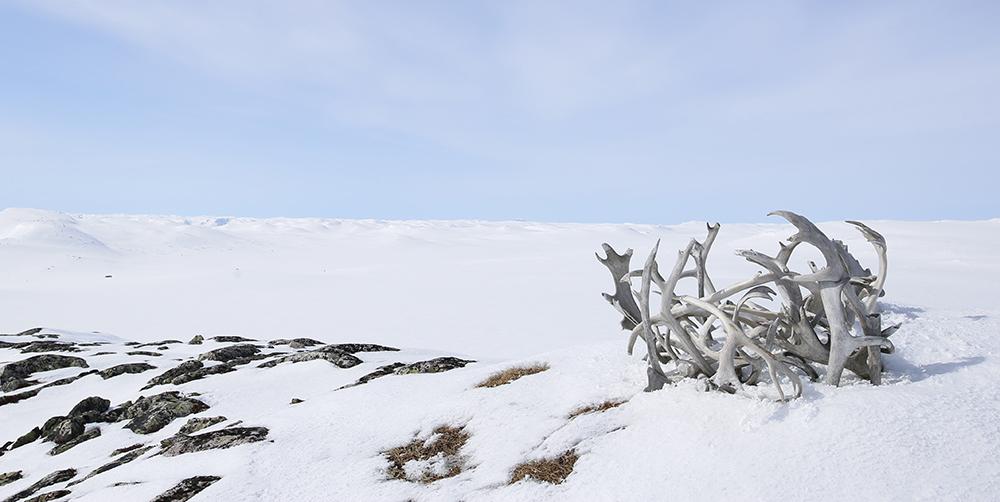 Fjellet kan kanskje gjerast endå meir spennande; 'der finst villrein der inne'. Illustrasjonsfoto: Anders Mossing