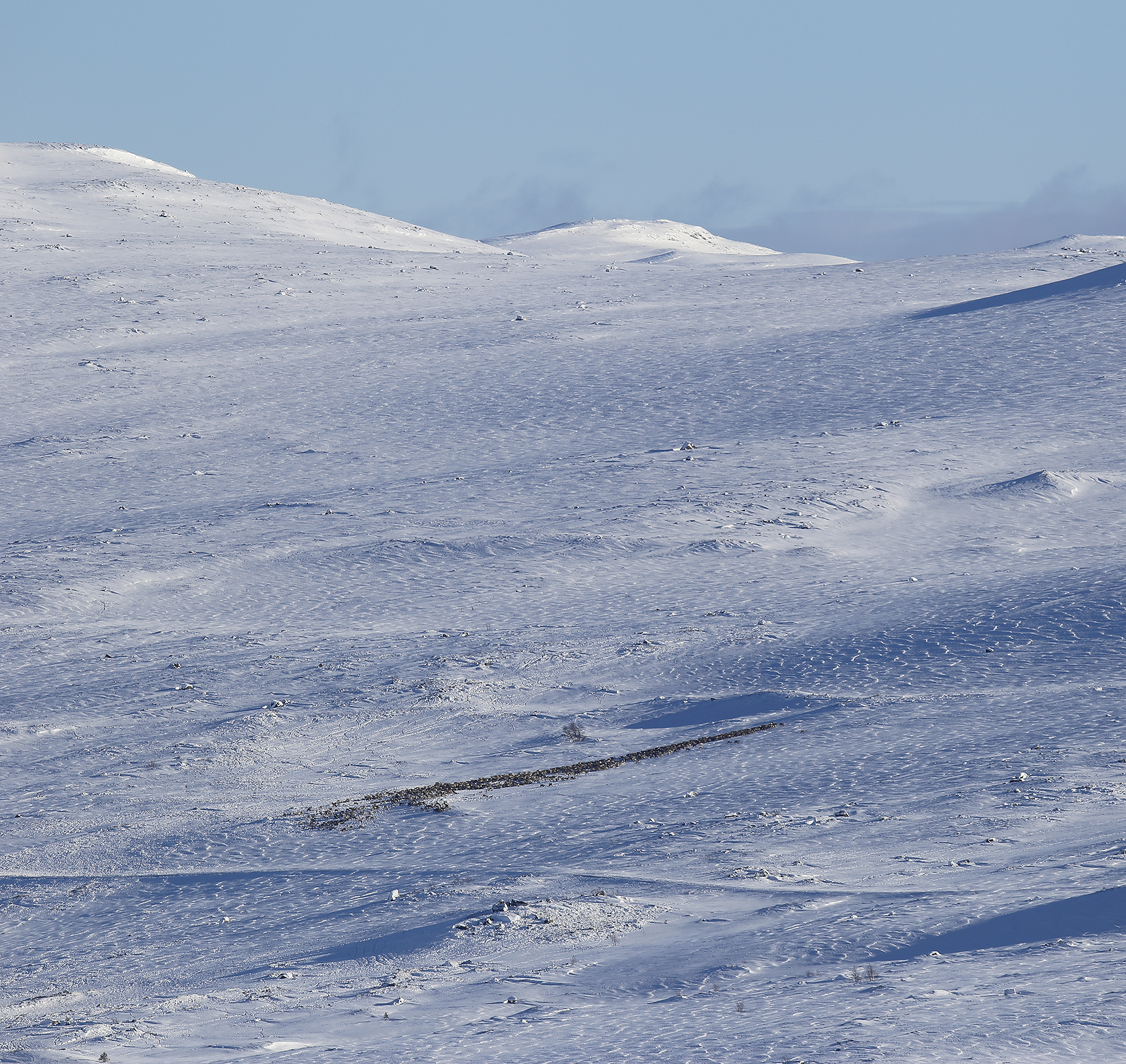 I starten av februar 2018 krysset denne flokken veien over Imingfjell, og oppholdt seg over lengre tid på vinterbeitene på Lufsjåtangen. Klikk for større versjon. Foto: Anders Mossing