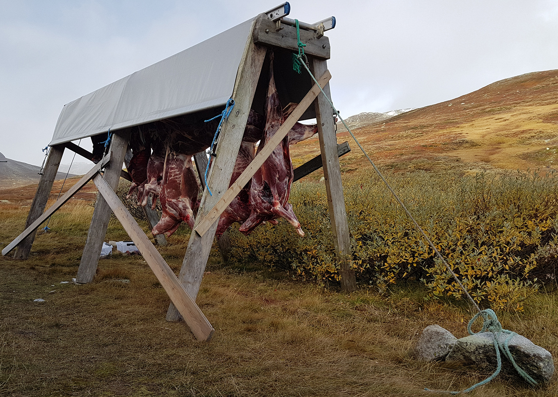 Høstens jaktresultat og sommerens kalvetellinger tilsier en bestandsvekt på Hardangervidda. Foto: Anders Mossing