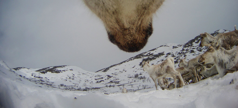 Foto: Norsk institutt for naturforskning/autokamera.