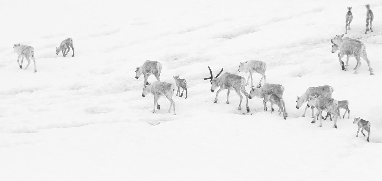 Foto: Anders Mossing