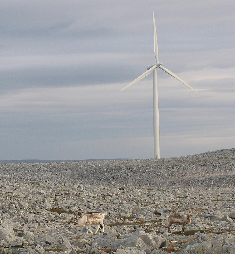 Illustrasjonsfoto tamrein og vindmøller: Jonathan E. Colman