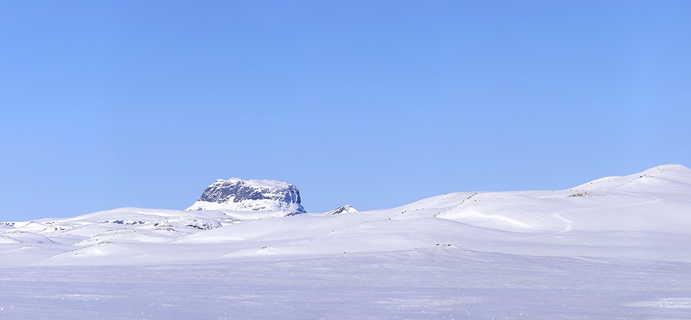 Hårteigen og ein reinsflokk på Hardangervidda. Båe delar omfattast av den regionale planen. Foto: Anders Mossing