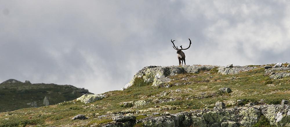 Illustrasjonsfoto: Anders Mossing