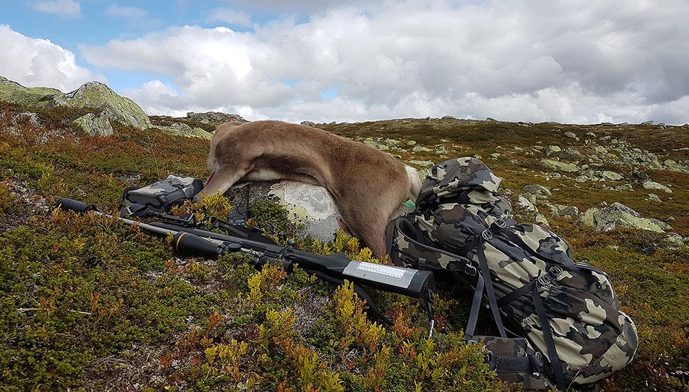 Ny versjon av Hjorteviltregisteret er lansert. Her kan bl.a. jegere registrere prøver etter endt jakt. Illustrasjonsfoto: Anders Mossing