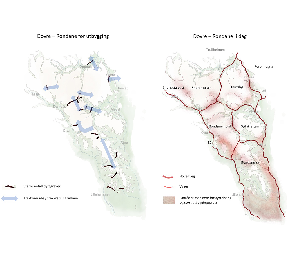 Rondane - før og nå. Klikk for større versjon. Figur: Norsk villreinsenter